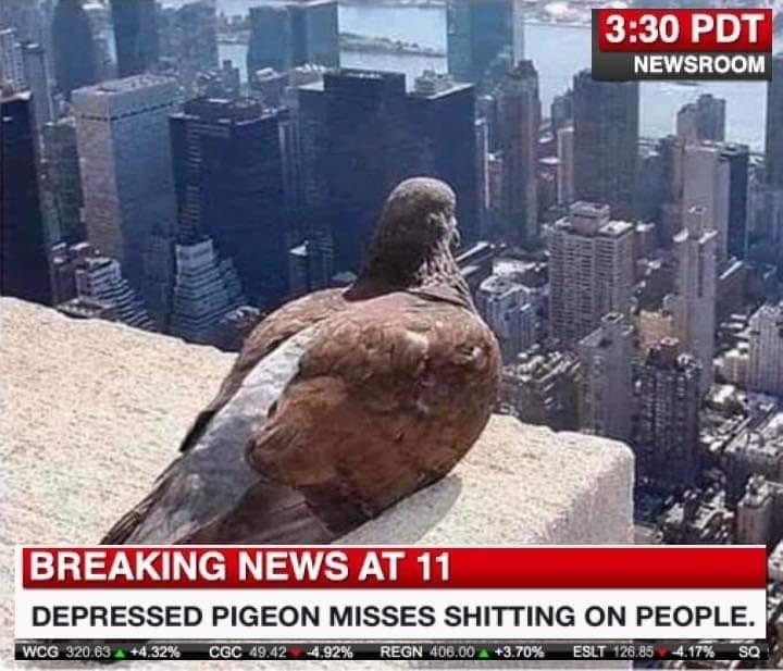 Pigeons and doves - 3:30 PDT NEWSROOM BREAKING NEWS AT 11 DEPRESSED PIGEON MISSES SHITTING ON PEOPLE. WCG 320.63 +4.32% CGC 49.42 4.92% REGN 406.00 +3.70% ESLT 126.85 4.17% SQ
