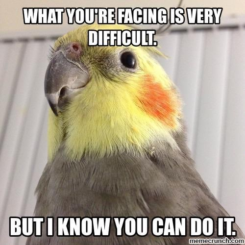 Bird - WHAT YOU'RE FACING IS VERY DIFFICULT. BUTI KNOW YOU CAN DO IT. memecrunch.com