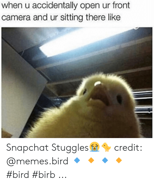 Photo caption - when u accidentally open ur front camera and ur sitting there like Snapchat Stuggles! credit: @memes.bird #bird #birb ...