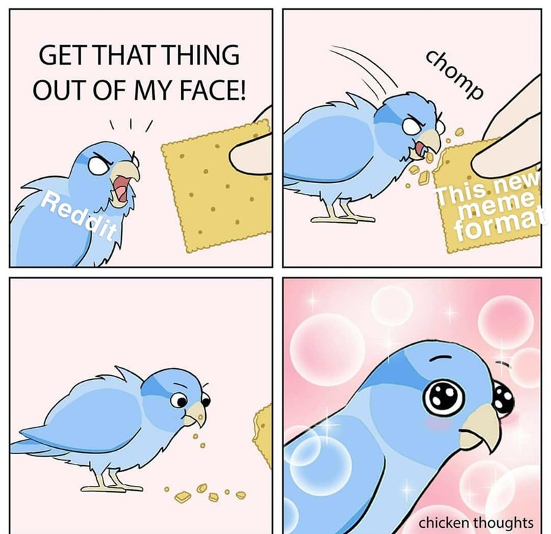 Bird - chomp GET THAT THING OUT OF MY FACE! This new meme format Reddit chicken thoughts
