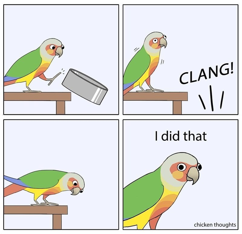 Bird - CLANG! I did that chicken thoughts
