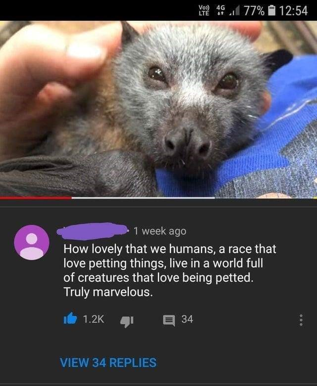 Snout - Vo) 4G LTÉ 77% 12:54 1 week ago How lovely that we humans, a race that love petting things, live in a world full of creatures that love being petted. Truly marvelous. 1.2K E 34 VIEW 34 REPLIES