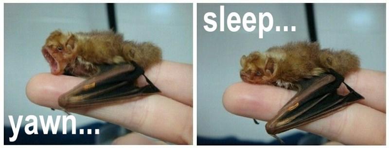 Organism - sleep... yaw.