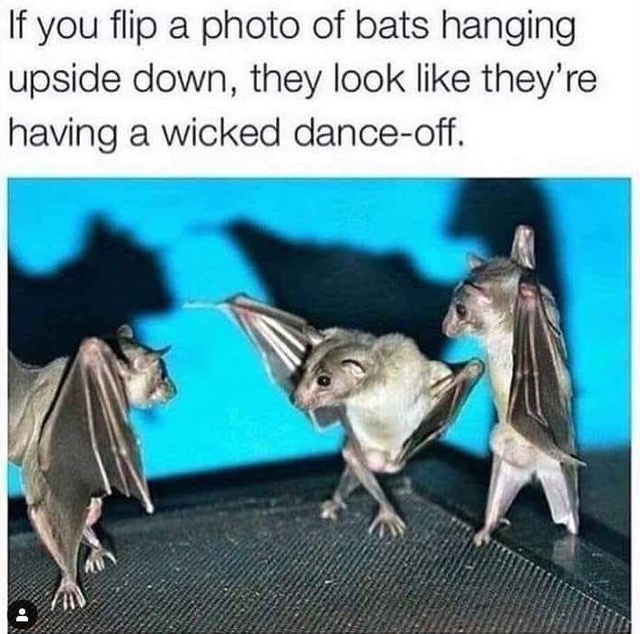 Organism - If you flip a photo of bats hanging upside down, they look like they're having a wicked dance-off.