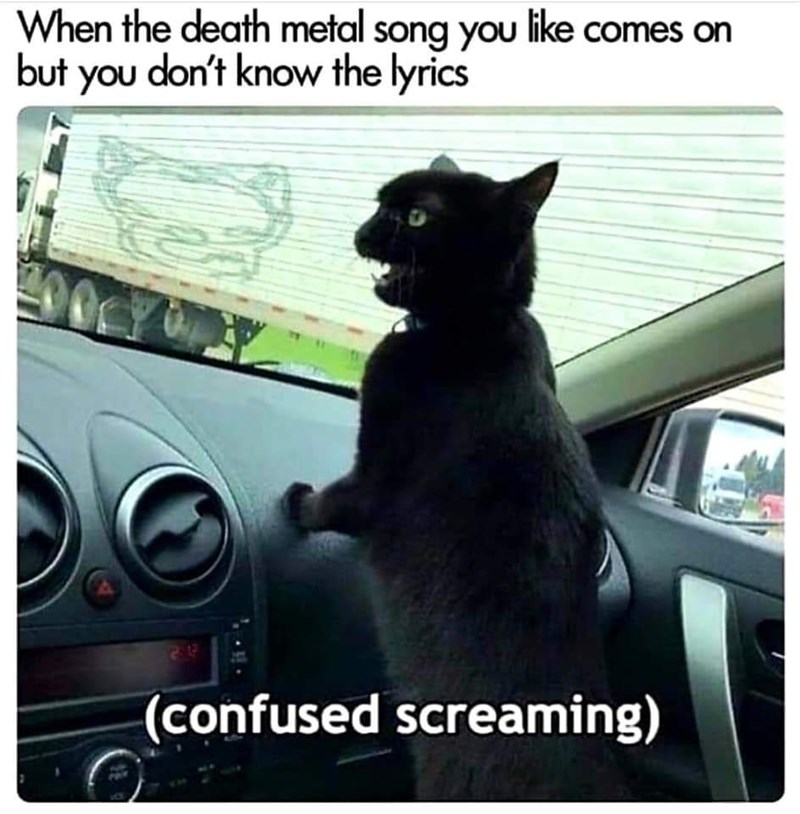 Cat - When the death metal song you like comes on but you don't know the lyrics (confused screaming)