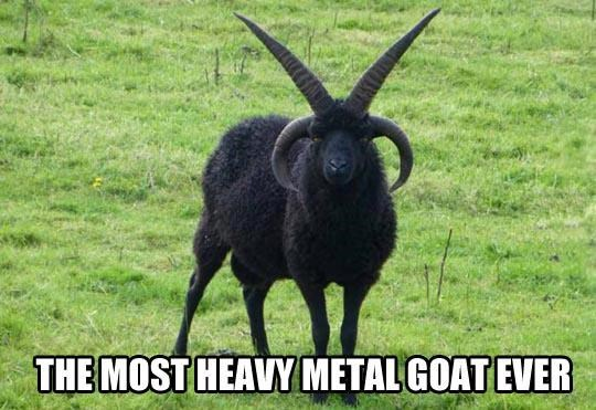 Horn - THE MOST HEAVY METAL GOAT EVER