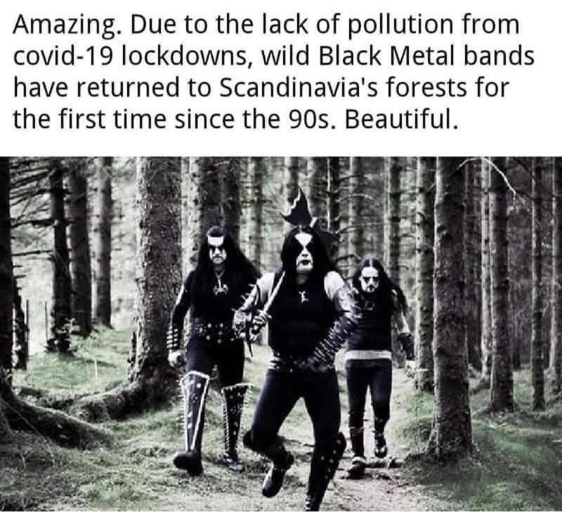 Text - Amazing. Due to the lack of pollution from covid-19 lockdowns, wild Black Metal bands have returned to Scandinavia's forests for the first time since the 90s. Beautiful.