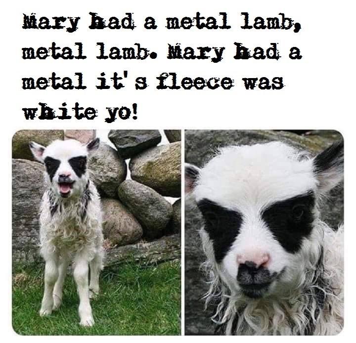 Nose - Mary had a metal lamb, metal lamb. Mary had a metal it' s fleece was white yo!