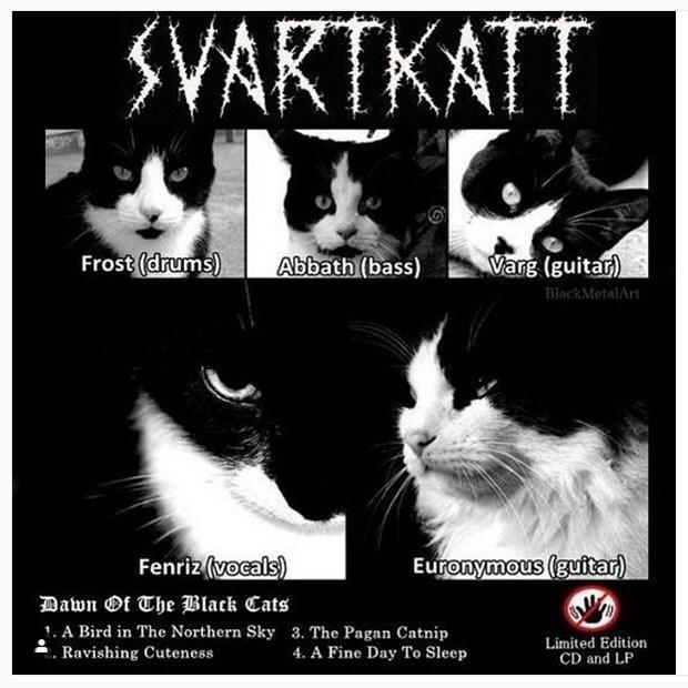 Cat - SVARTKATT Frost (drums) Abbath (bass) Varg (guitar) BlackMetalArt Fenriz (vocals) Euronymous (guitar) Dawn Of The Black Cats 1. A Bird in The Northern Sky 3. The Pagan Catnip Ravishing Cuteness 4. A Fine Day To Sleep Limited Edition CD and LP