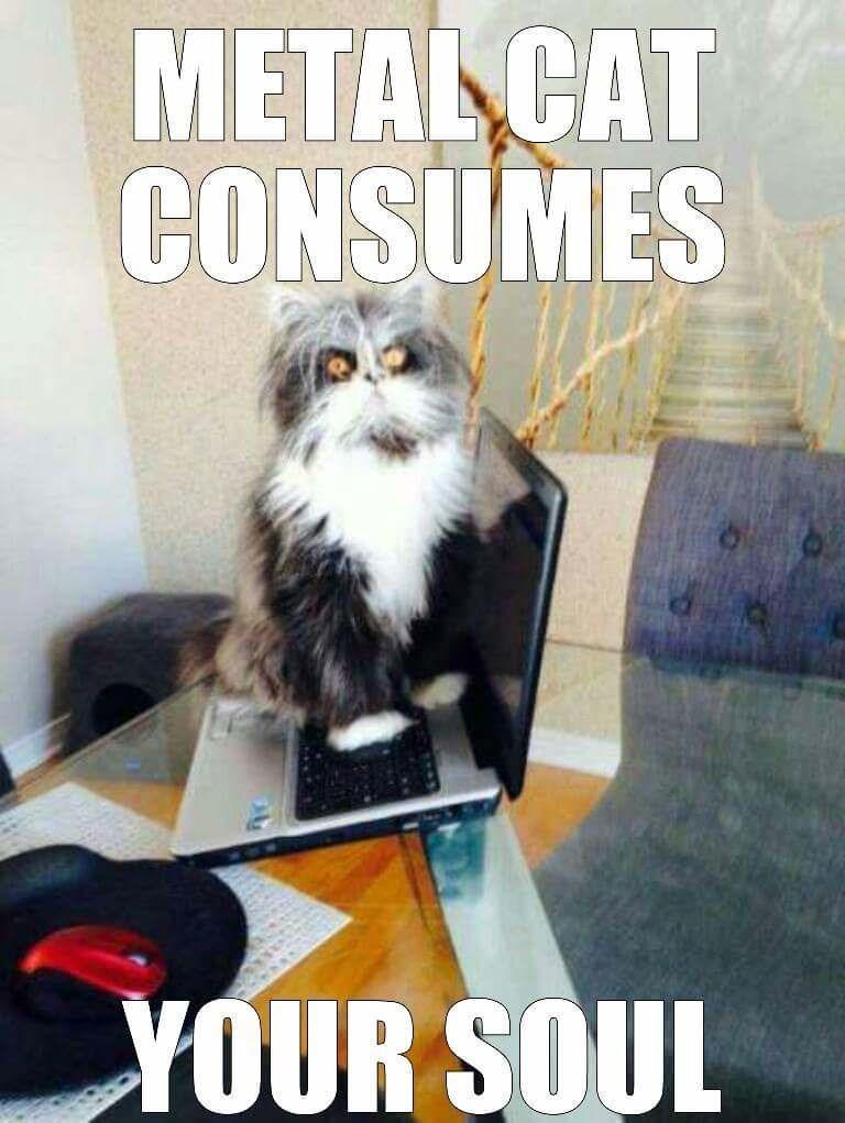 Cat - METAL CAT CONSUMES YOUR SOUL