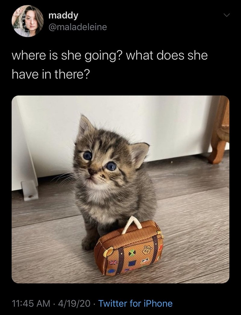 Cat - maddy @maladeleine where is she going? what does she have in there? 11:45 AM · 4/19/20 · Twitter for iPhone