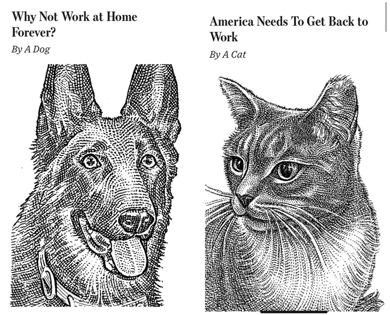 Vertebrate - Why Not Work at Home Forever? America Needs To Get Back to Work By A Dog By A Cat