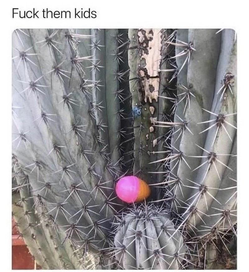 Cactus - Fuck them kids