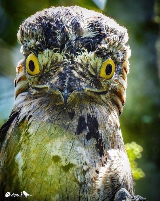 Bird - ebout