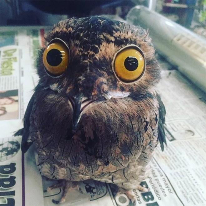 Owl - para mayor dad puedes Periódico EBE endas Drfesta PRIT