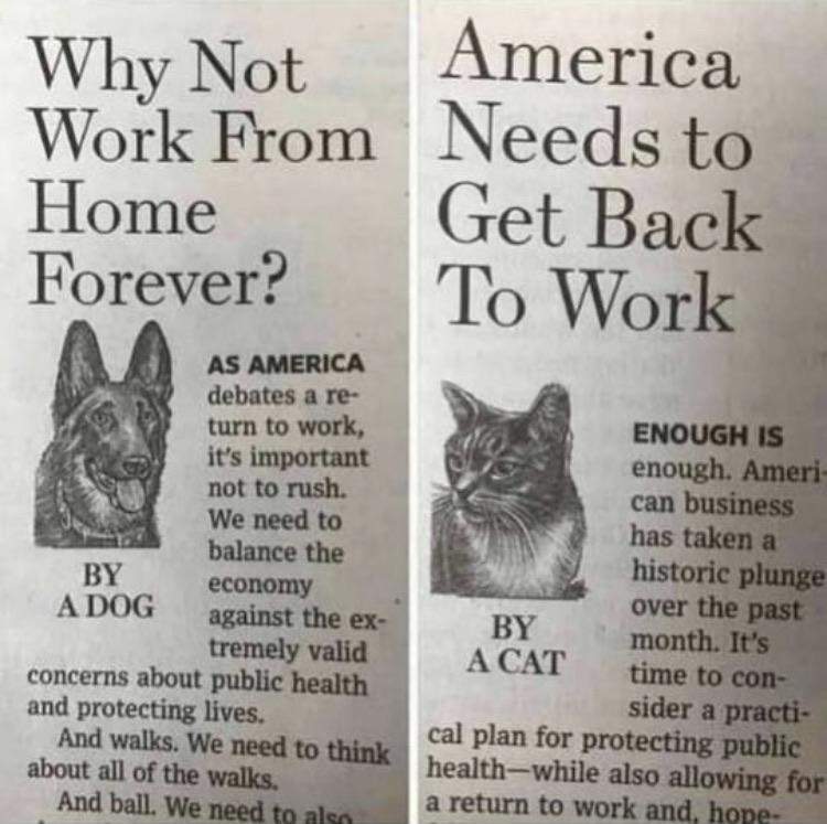 Why Not Work From Home Forever? BY A DOG AS AMERICA debates a return to work. it's important not to rush. We need to balance the economy against the extremely valid concerns about public health and protecting lives. America needs Get Back To Work BY A CAT ENOUGH IS enough. American business has taken a historic over the past— month. It's time to consider a practical plan for protecting public health—while also allowing for