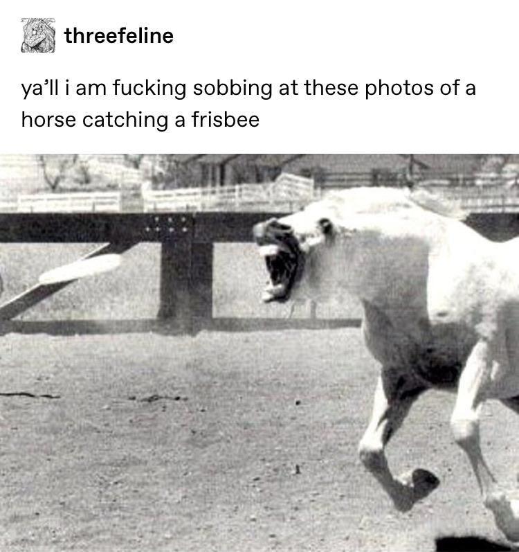 animal memes - 9474220032