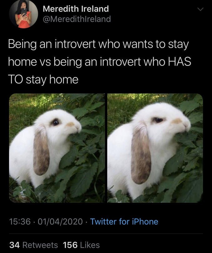 Vertebrate - Meredith Ireland @Meredithlreland Being an introvert who wants to stay home vs being an introvert who HAS TO stay home 15:36 · 01/04/2020 · Twitter for iPhone 34 Retweets 156 Likes