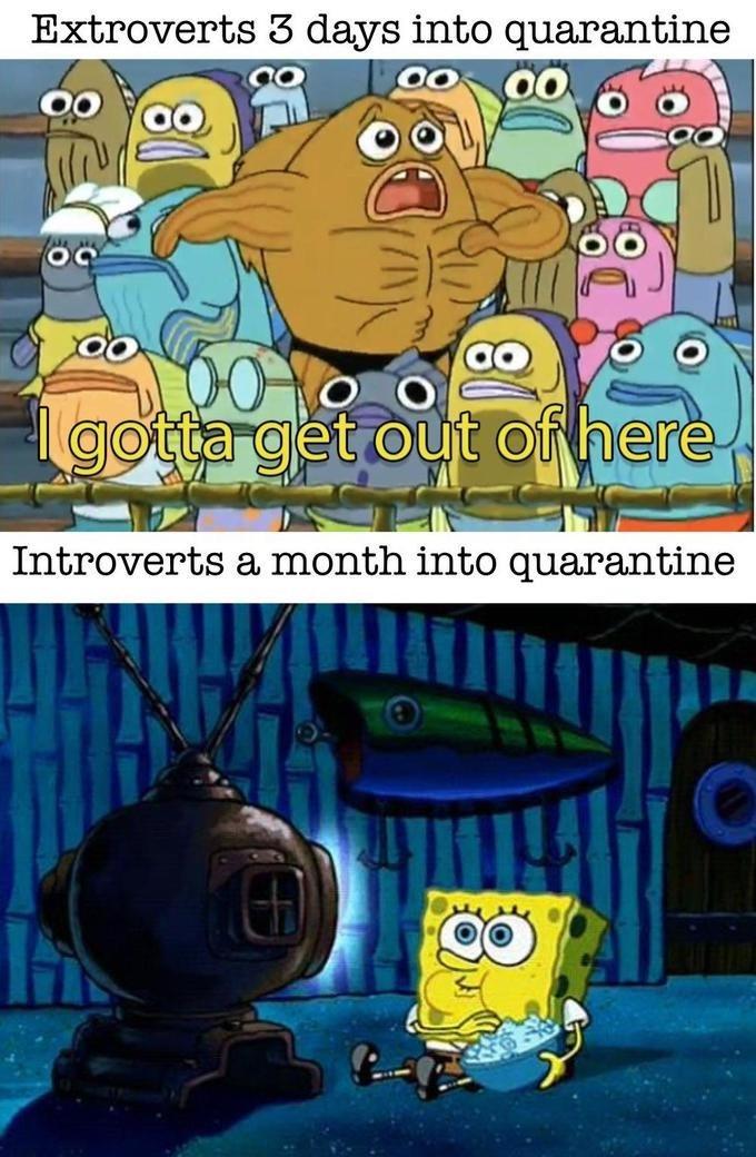 Cartoon - Extroverts 3 days into quarantine 100 000 gotta get out of here Introverts a month into quarantine
