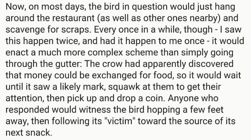 Text - Now, on most days, the bird in question would just hang around the restaurant (as well as other ones nearby) and scavenge for scraps. Every once in a while, though -I saw this happen twice, and had it happen to me once - it would enact a much more complex scheme than simply going through the gutter: The crow had apparently discovered that money could be exchanged for food, so it would wait until it saw a likely mark, squawk at them to get their attention, then pick up and drop a coin. Any