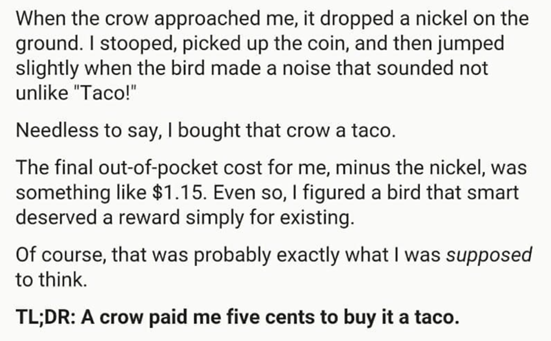 """Text - When the crow approached me, it dropped a nickel on the ground. I stooped, picked up the coin, and then jumped slightly when the bird made a noise that sounded not unlike """"Taco!"""" Needless to say, I bought that crow a taco. The final out-of-pocket cost for me, minus the nickel, was something like $1.15. Even so, I figured a bird that smart deserved a reward simply for existing. Of course, that was probably exactly what I was supposed to think. TL;DR: A crow paid me five cents to buy it a t"""