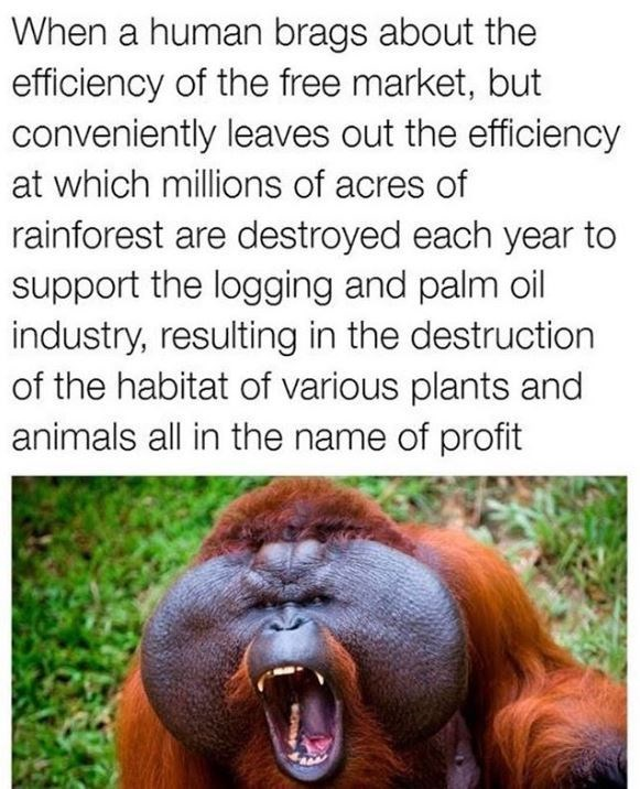 Orangutan - When a human brags about the efficiency of the free market, but conveniently leaves out the efficiency at which millions of acres of rainforest are destroyed each year to support the logging and palm oil industry, resulting in the destruction of the habitat of various plants and animals all in the name of profit