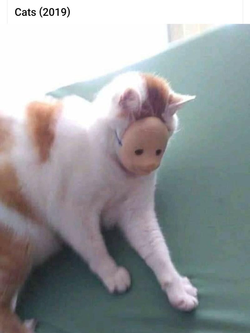 Cat - Cats (2019)