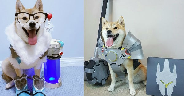 overwatch,dogs,doge,cosplay,blizzard,cute,video games,funny