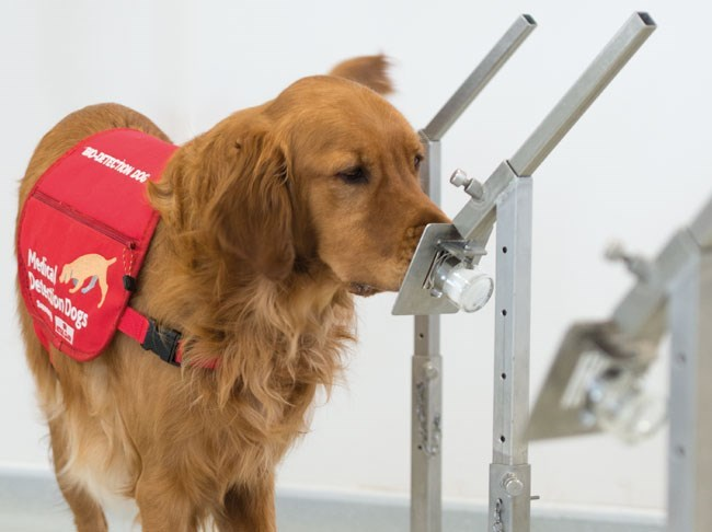Dog - 0-AETECTION DOG Mediral peaion Dogs