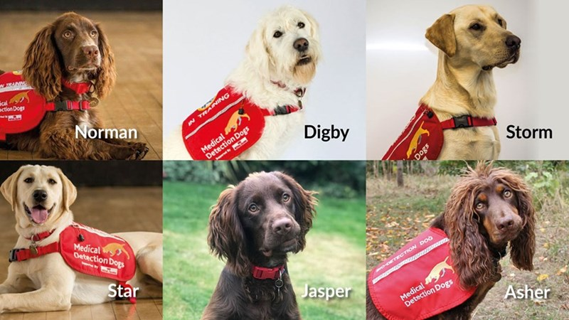 Dog - V TRAINNG action Dogs Norman IN Medical DetecionDogs Digby Storm Medical Oetection Dogs Star Jasper O-DETECTION DOG Medical Detection Dogs Asher sog