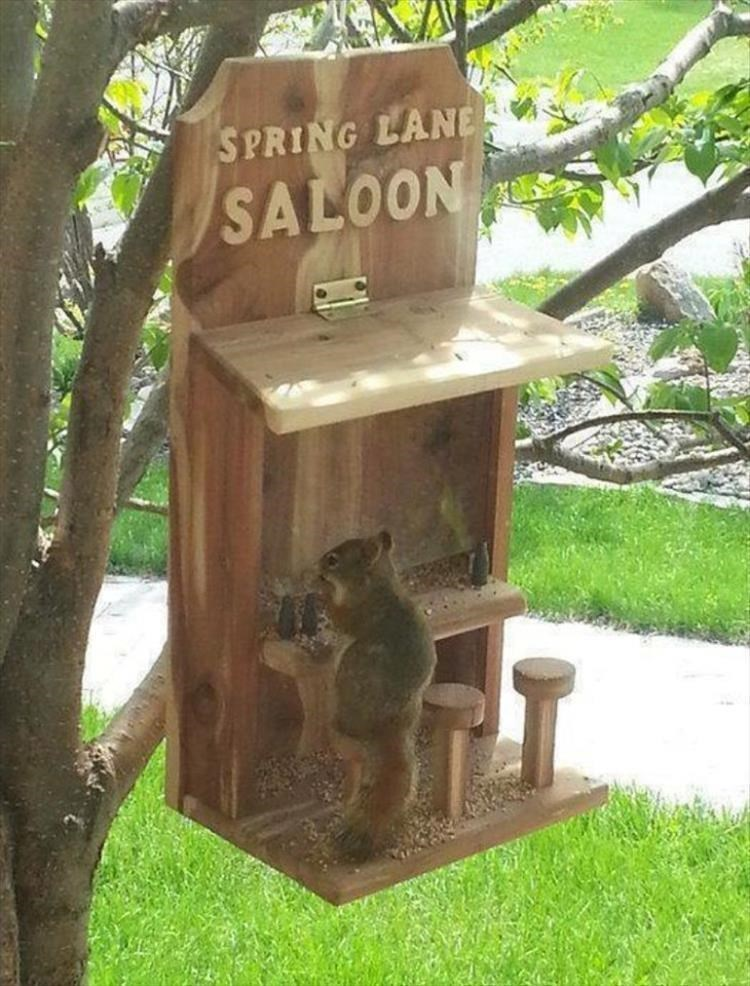 Spring lane saloon cute squirrel sitting on a tiny bench carved into a wooden sign