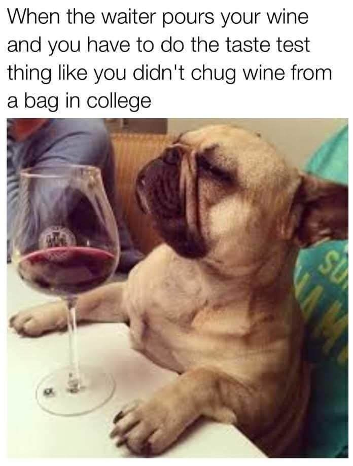Dog - When the waiter pours your wine and you have to do the taste test thing like you didn't chug wine from a bag in college SU