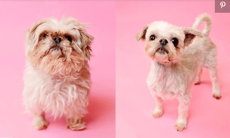 dogs makeovers