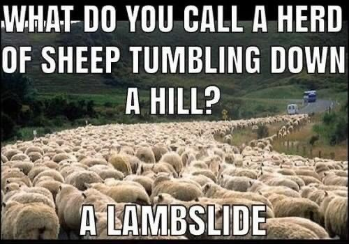 Sheep - WHAT-DO YOU CALL A HERD OF SHEEP TUMBLING DOWN A HILL? A LAMBSLIDE