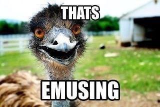 Ostrich - THATS EMUSING