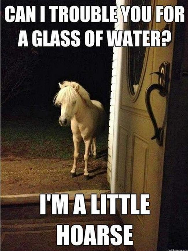 Horse - CAN I TROUBLE YOU FOR A GLASS OF WATER? I'MA LITTLE HOARSE ouickmeme o