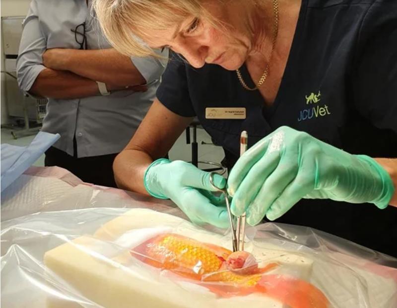 fish surgery
