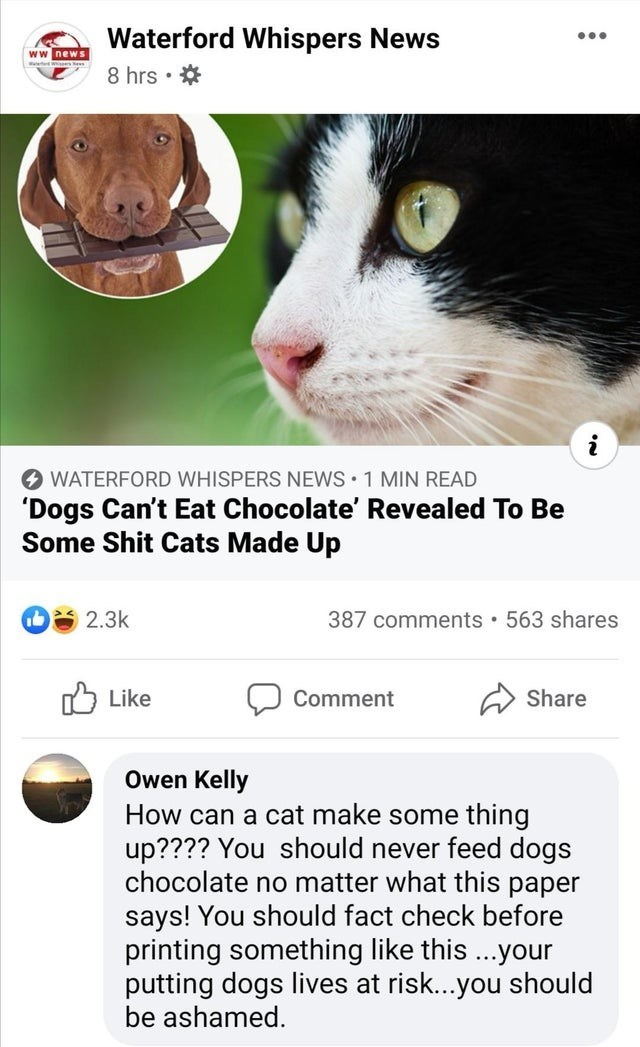 Cat - Waterford Whispers News ww news 8 hrs • * i O WATERFORD WHISPERS NEWS 1 MIN READ 'Dogs Can't Eat Chocolate' Revealed To Be Some Shit Cats Made Up 2.3k 387 comments • 563 shares Like לן Comment Share Owen Kelly How can a cat make some thing up???? You should never feed dogs chocolate no matter what this paper says! You should fact check before printing something like this ...your putting dogs lives at risk...you should be ashamed.