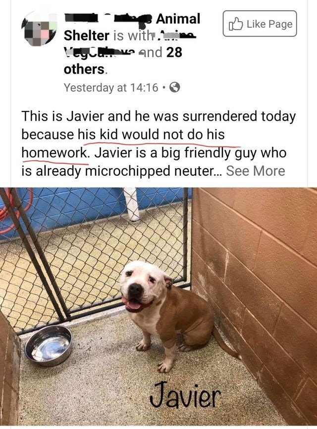 Dog - Animal O Like Page Shelter is with. L'egCaa and 28 others. Yesterday at 14:16 • O This is Javier and he was surrendered today because his kid would not do his homework. Javier is a big friendly guy who is already microchipped neuter. See More Javier