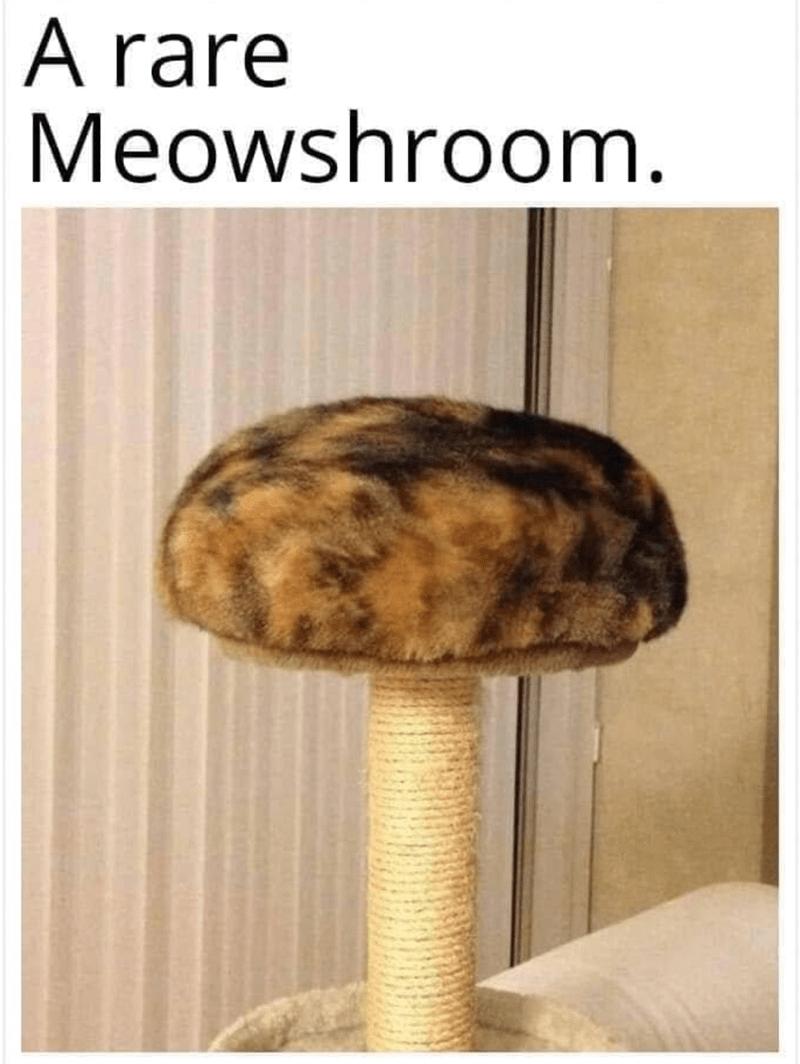 Product - A rare Meowshroom.