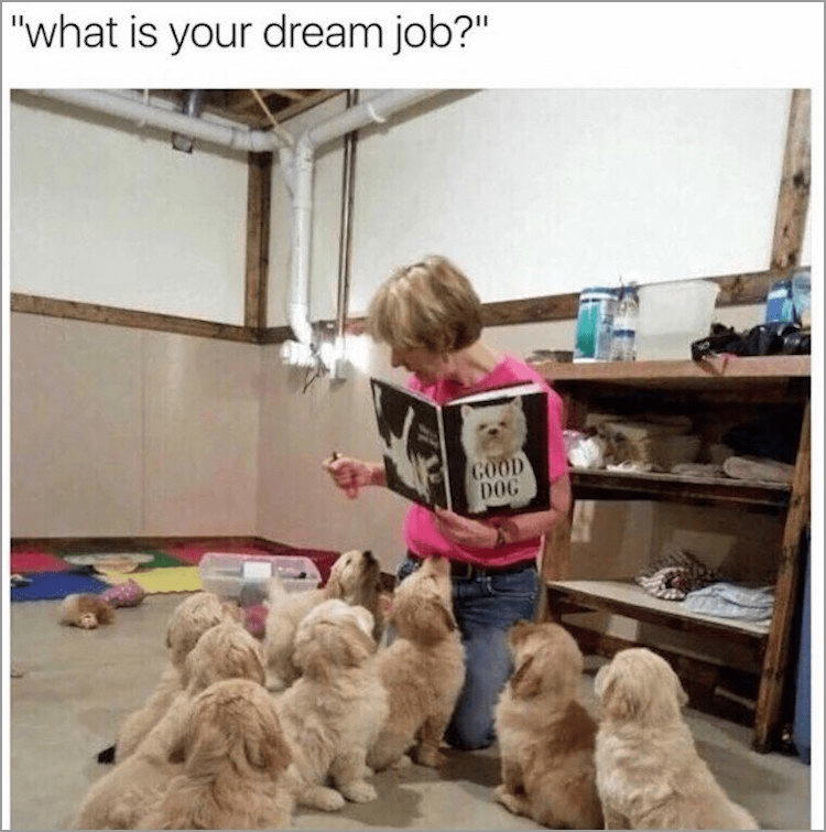 """Dog - """"what is your dream job?"""" GOOD DOG"""