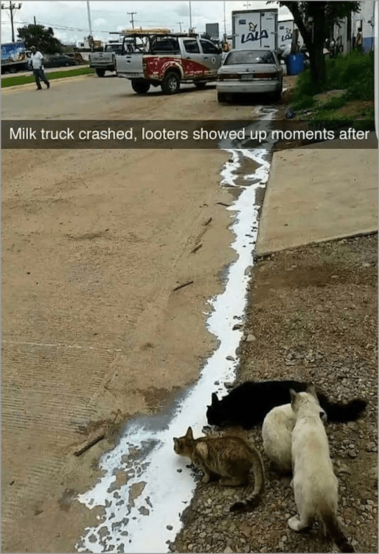 Street dog - Milk truck crashed, looters showed up moments after