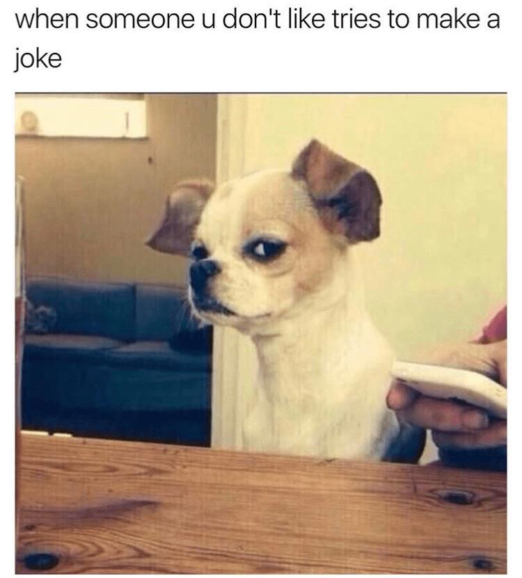 Dog - when someone u don't like tries to make a joke