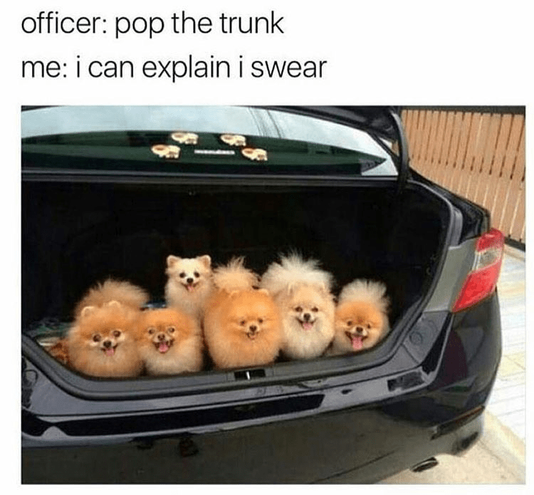 Trunk - officer: pop the trunk me: i can explain i swear