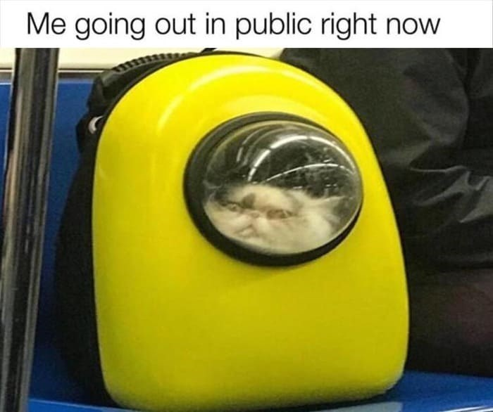 Me going out in public right now cat in a space capsule backpack carrier coronavirus meme