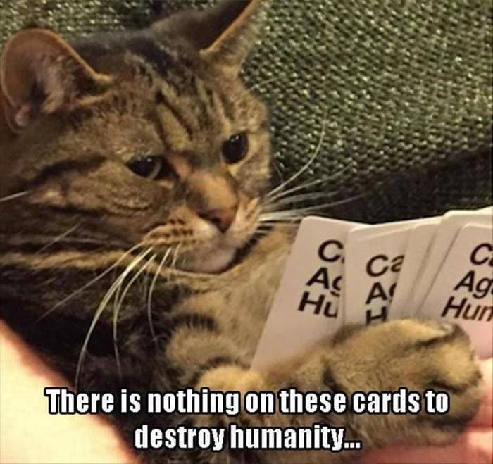 cat holding cards against humanity There is nothing on these cards tor destroy humanity...