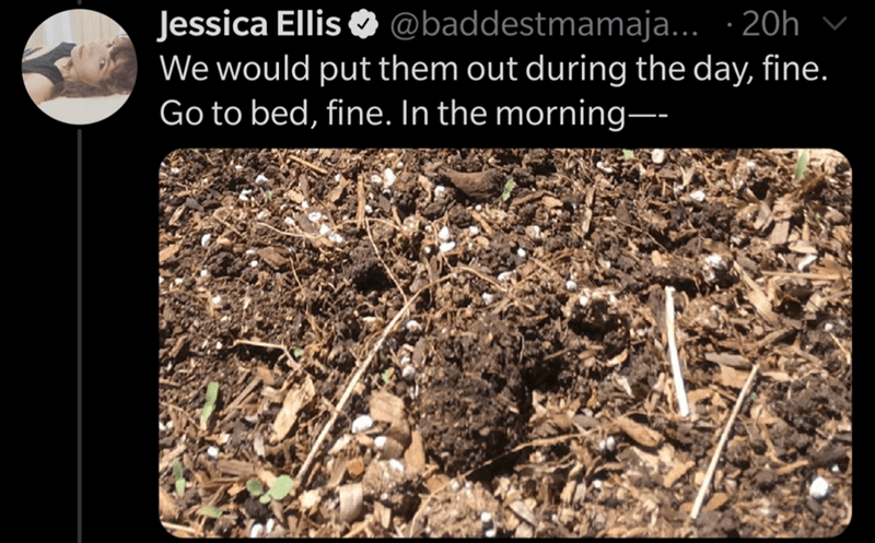 Soil - Jessica Ellis O v @baddestmamaja... · 20h We would put them out during the day, fine. Go to bed, fine. In the morning--