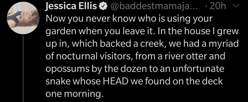 Text - Text - Jessica Ellis O v @baddestmamaja.. · 20h Now you never know who is using your garden when you leave it. In the house I grew up in, which backed a creek, we had a myriad of nocturnal visitors, from a river otter and opossums by the dozen to an unfortunate snake whose HEAD we found on the deck one morning.