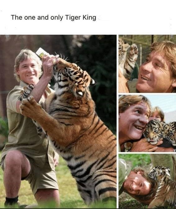 The one and only Tiger King Steve Irwin crocodile dandy feeding and playing with tigers
