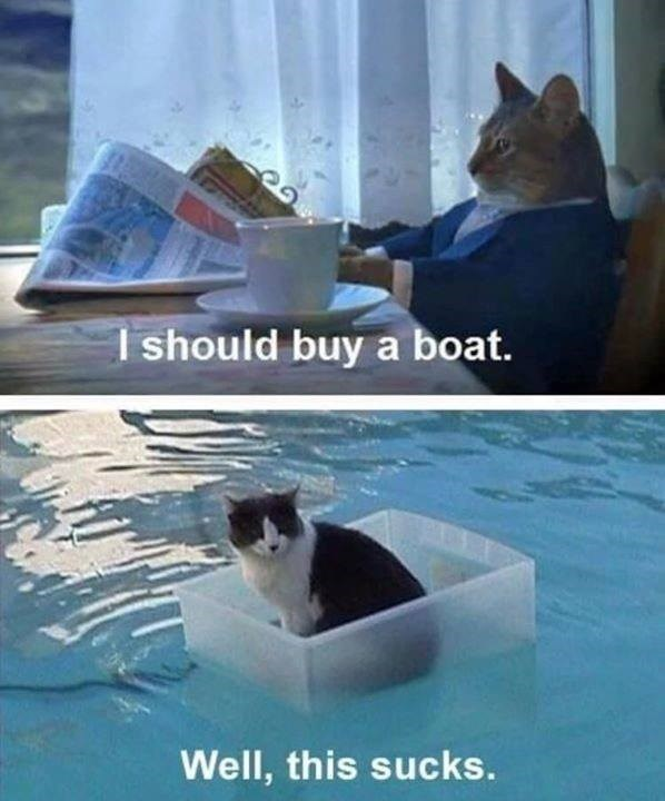 should buy a boat. Well, this sucks. cat looking up from the newspaper and cat floating on water in a plastic container